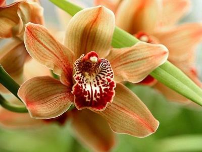 Орхидея! Разве можно превзойти само совершенство?