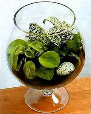 Сад в бутылке растения в интерьере